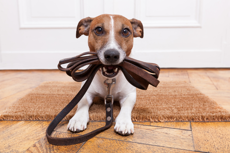 Dog Obedience Training Marietta, Roswell, Alpharetta, Woodstock, Kennesaw