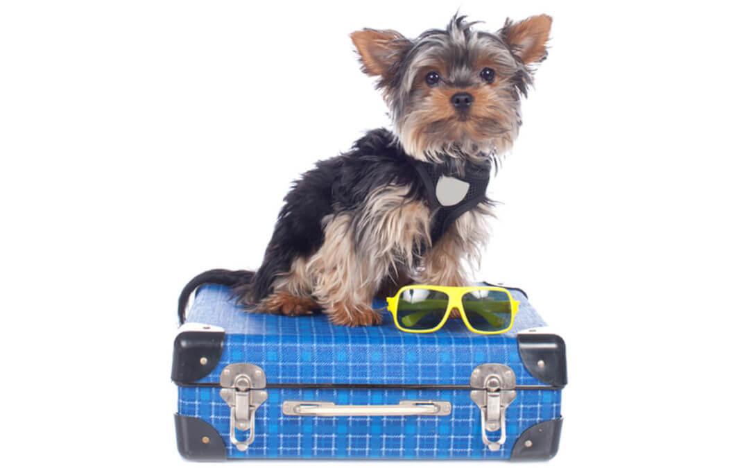 dog boarding marietta
