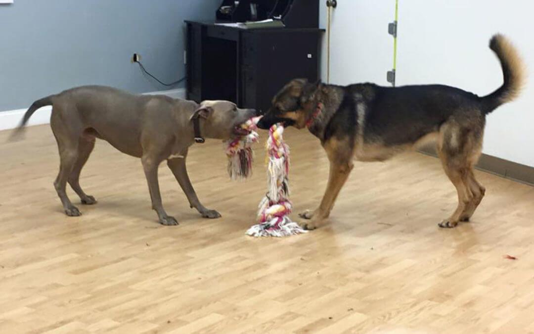 doggy day care marietta