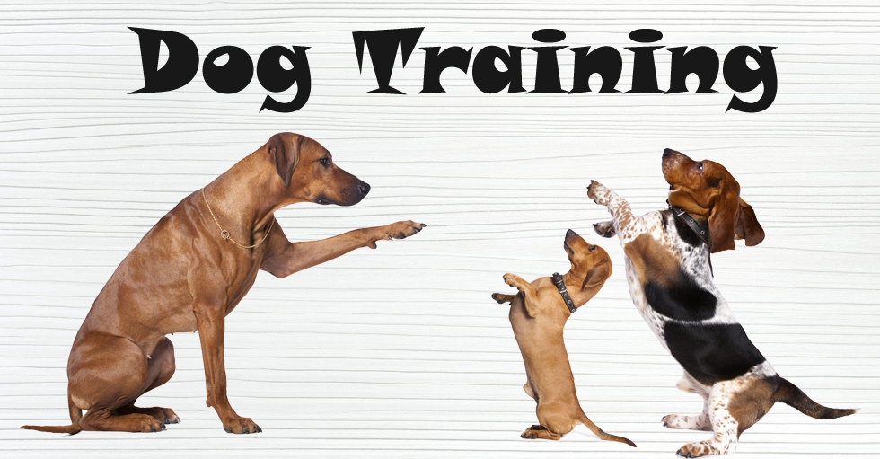 Image result for dog training